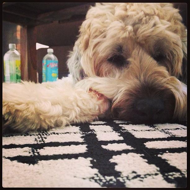 Roscoe relaxing