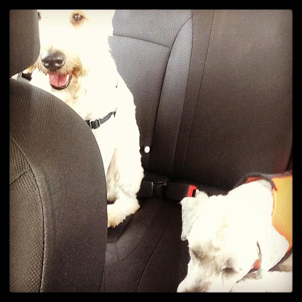 First day on the road to LA. Dogs feelings like my feelings...