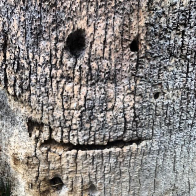 Sly tree face