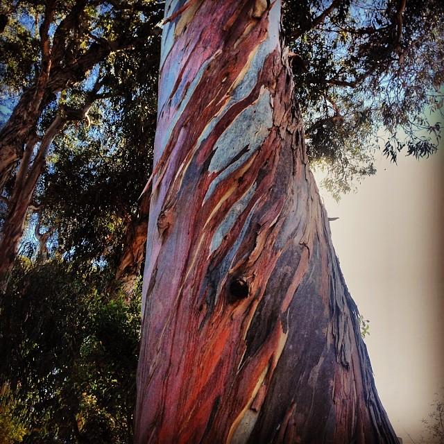 Bark fire tree trunked